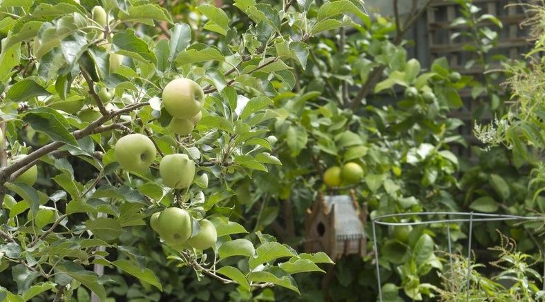 LB_Garden_Apples